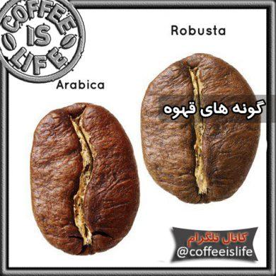 انواع گونه های قهوه