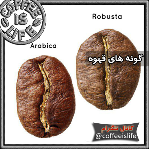 قهوه | انواع گونه های قهوه | کافی شاپ دات کام