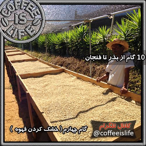 قهوه | ١٠ گام از بذر تا فنجان -از مزرعه تا فنجان قهوه
