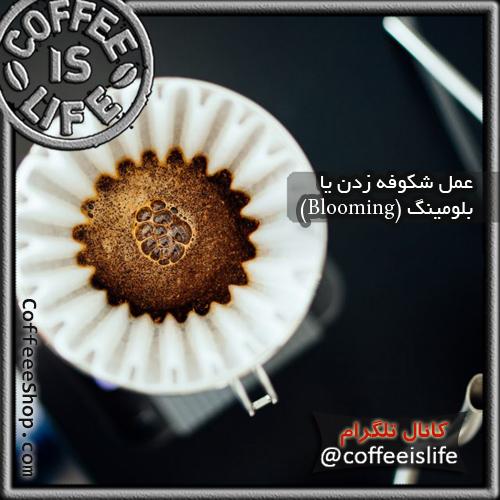 قهوه | عمل شکوفه زدن یا بلومینگ (Blooming)چیست؟