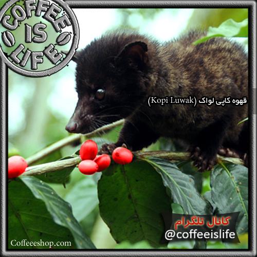 قهوه | قهوه کاپی لواک (Kopi Luwak)