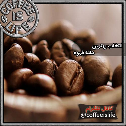 قهوه | عوامل انتخاب بهترین دانه قهوه