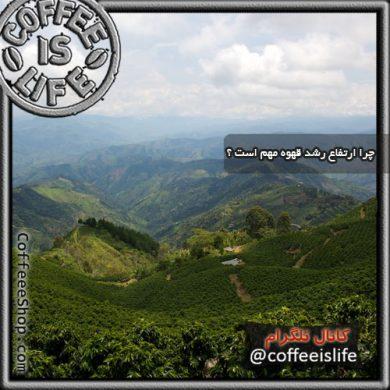 ارتفاع رشد قهوه