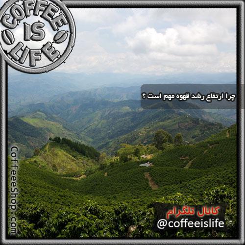 قهوه | چرا ارتفاع رشد قهوه مهم است ؟