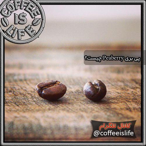 قهوه |قهوه پی بری (Peaberry) چیست؟