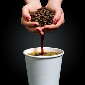 همه چیز درباره گیاه قهوه