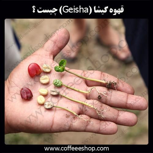 قهوه گیشا (Geisha) چیست ؟