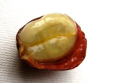 جداسازی میوه از دانه:(Pulping) قهوه