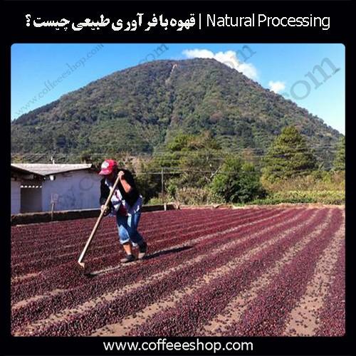 Natural Processing | قهوه با فرآوری طبیعی چیست ؟