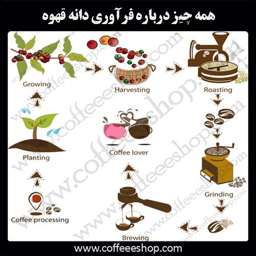 همه چیز درباره فرآوری دانه قهوه