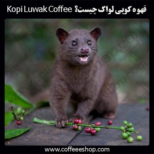 قهوه کوپی لواک چیست؟ Kopi Luwak Coffee