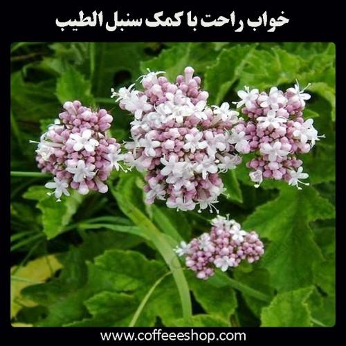 خواب راحت با کمک سنبل الطیب | Valeriana officinalis