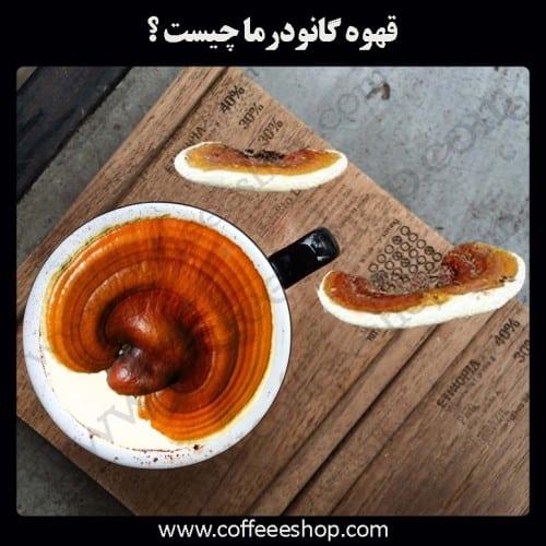 گانودرما | قهوه گانودرما چیست ؟
