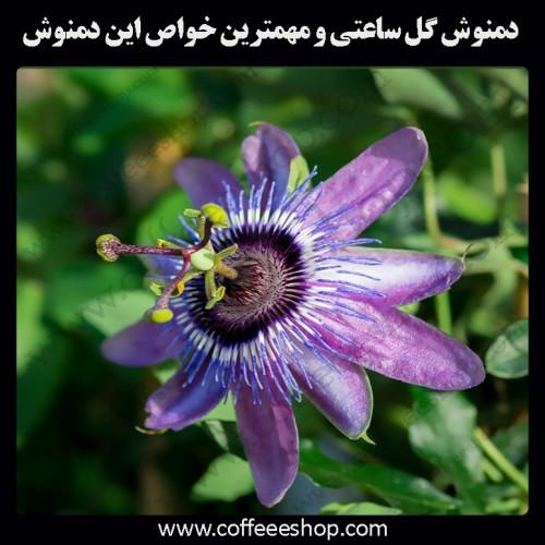 دمنوش گل ساعتی و مهمترین خواص این دمنوش