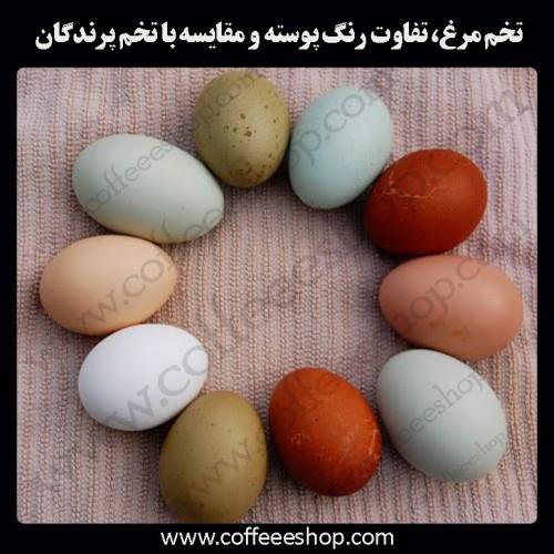 تخم مرغ، تفاوت رنگ پوسته و مقایسه با تخم پرندگان