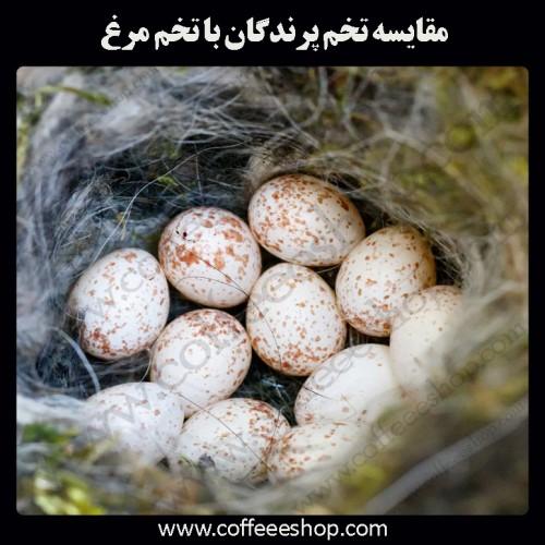 مقایسه تخم پرندگان با تخم مرغ: