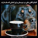 افتتاح کافی شاپی در عربستان برای کسانی که سگ دارند